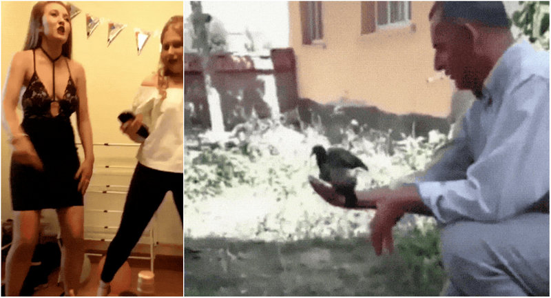 Funny gifs with an unexpected plot