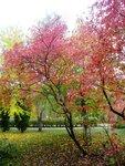 Живописная Осень.