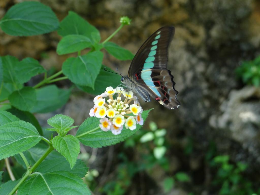 Инсектарий зоопарка Тама. Япония