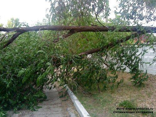Ураган повалил дерево в Луганске