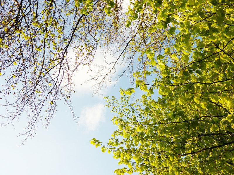 весенняя листва