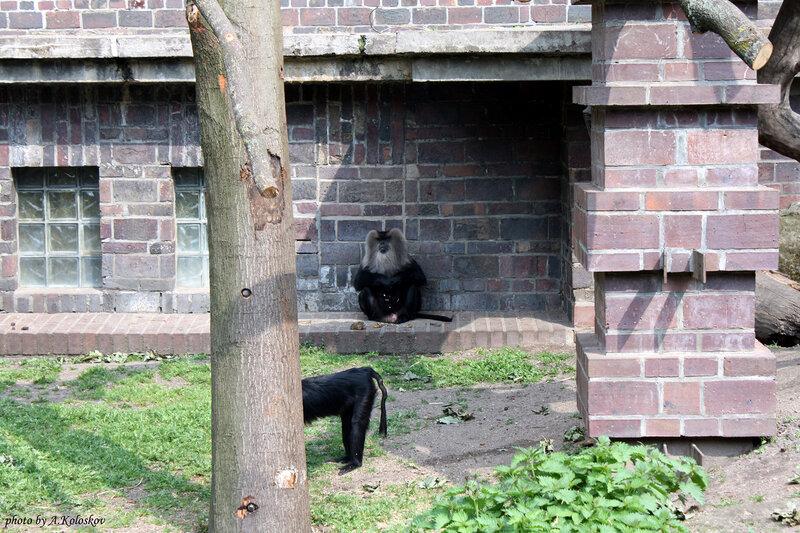 Лейпциг_зоопарк