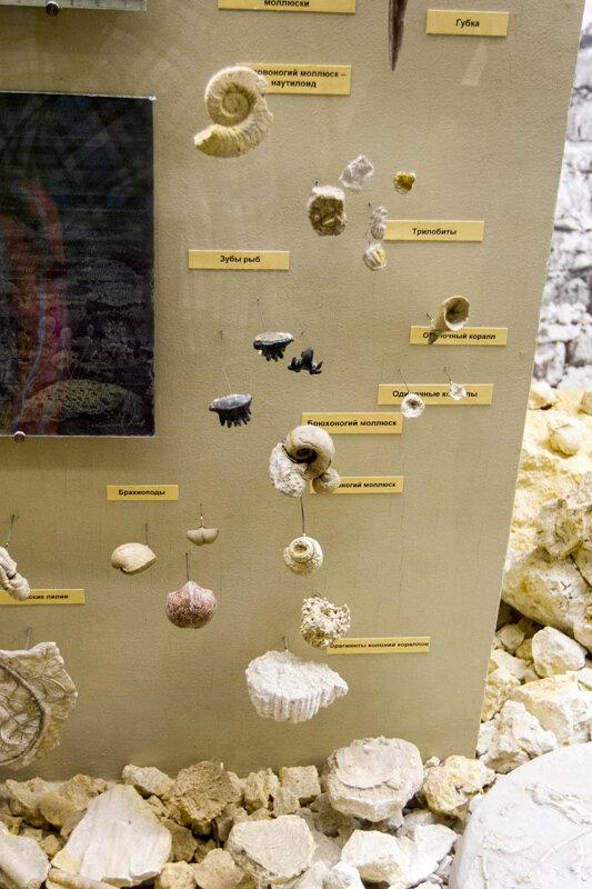 Палеонтологический музей, Москва