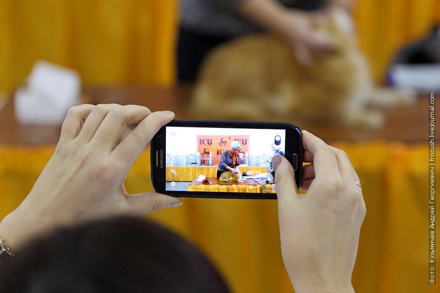конгресс-ринг Мадам ICU на международной выставке кошек «Содружество 2013» — гран-при Royal Canin