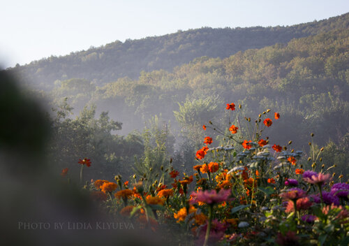 Цветы на фоне горы