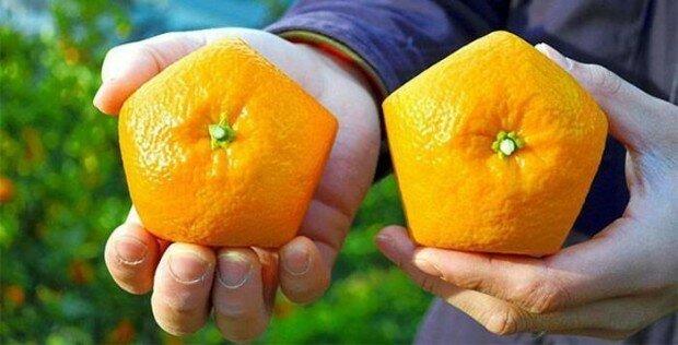 Пятиугольные апельсины от японского фермера