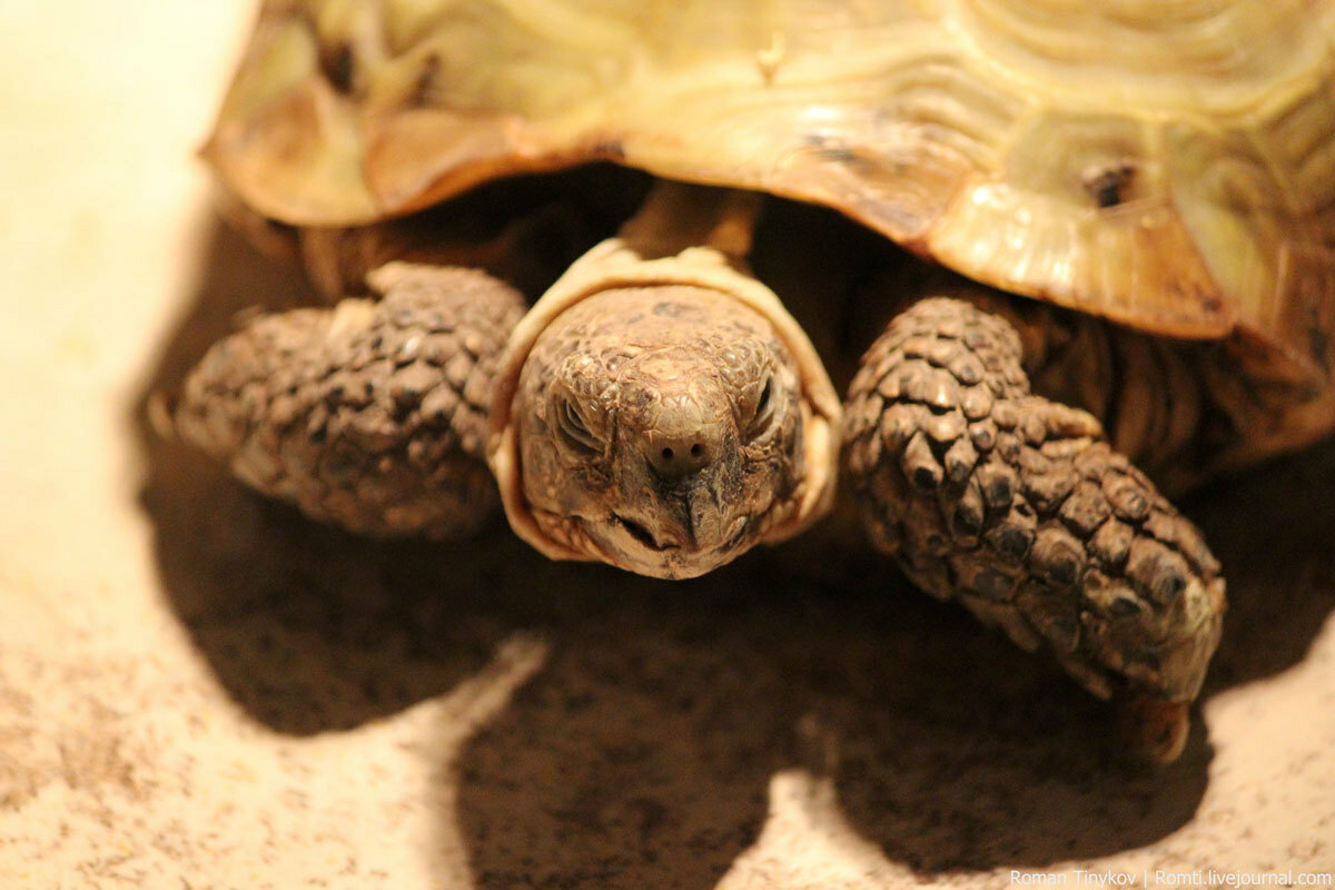 Картинка морских черепах
