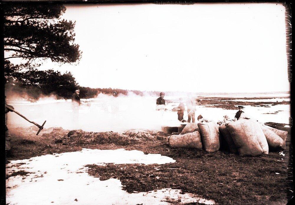 1913. Село Ларьяк.  Сушение сухого ореха