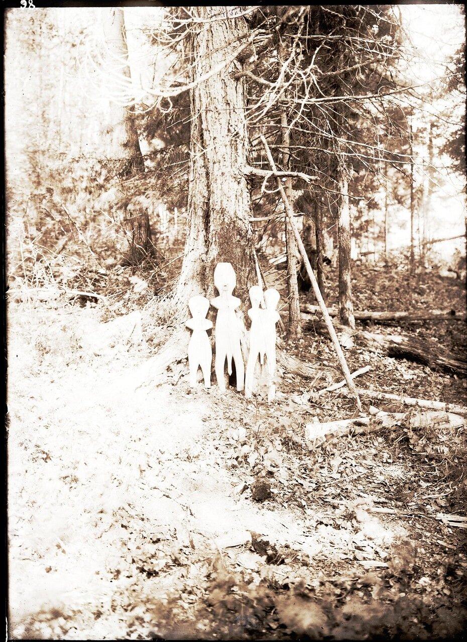 Кедровая роща возле озера