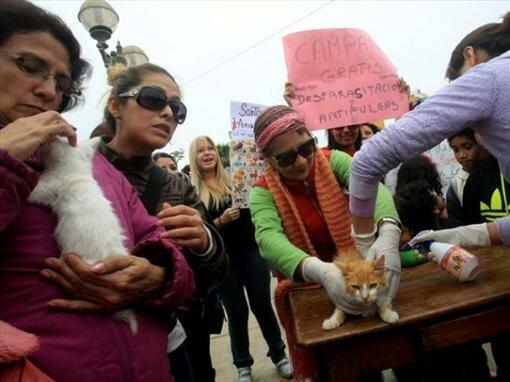 В Перу нажарили праздничных шашлыков из кошек (6 фото)