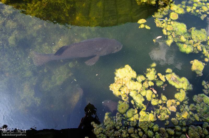 рыбка метра в полтора длиной