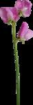 Holliewood_SpringFaeries_Flowers12.png