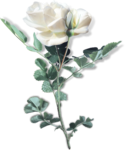mzimm_onlyyou_rose_03a_sh.png