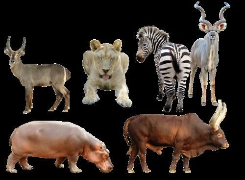 Клипарт животные