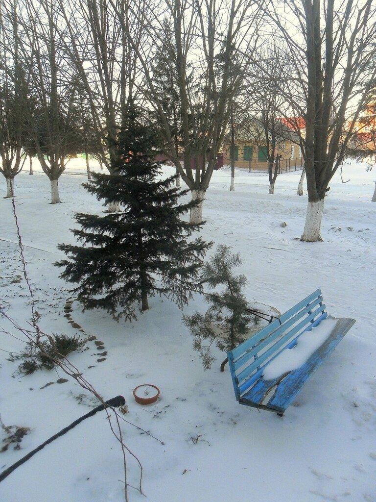 Снег, мороз, ёлочка...