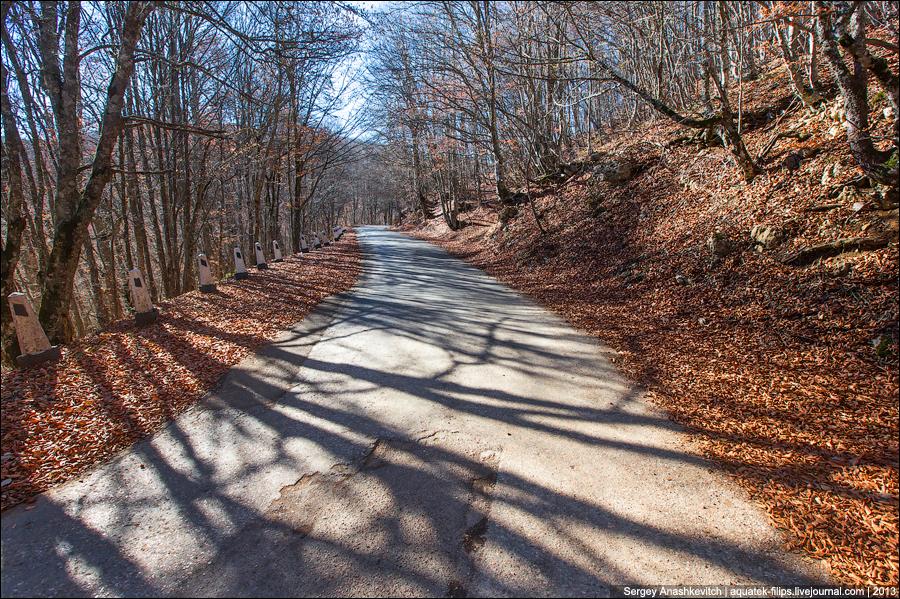 Осень в крымском лесу