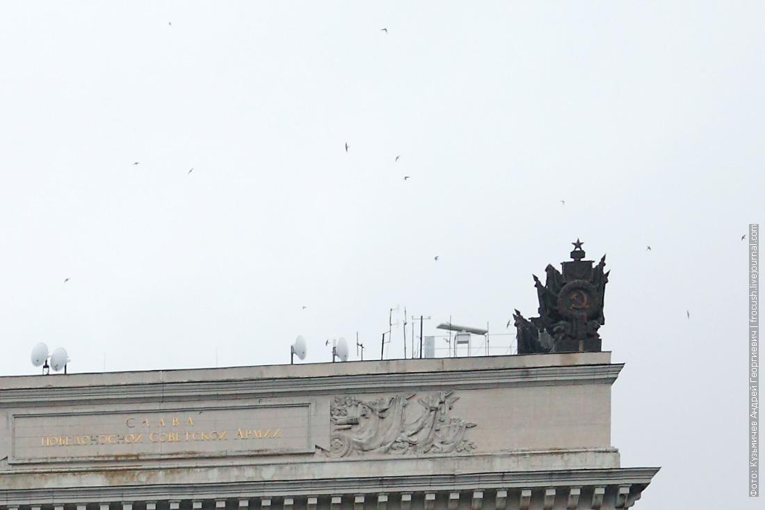 чайки над аркой шлюза №13 ВДСК
