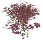 R11 - Garden Plant 2014 - 126.png