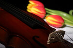 Violin, musical notes, candles and tulips (6).jpg