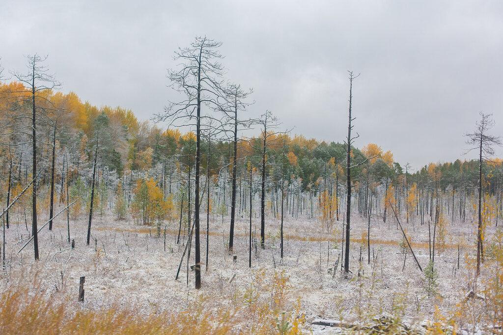 Поездка в Ханты-Мансийск