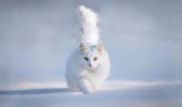 100 самых красивых зимних фотографии: пейзажи, звери и вообще 0 10f5d0 eca90cd2 orig