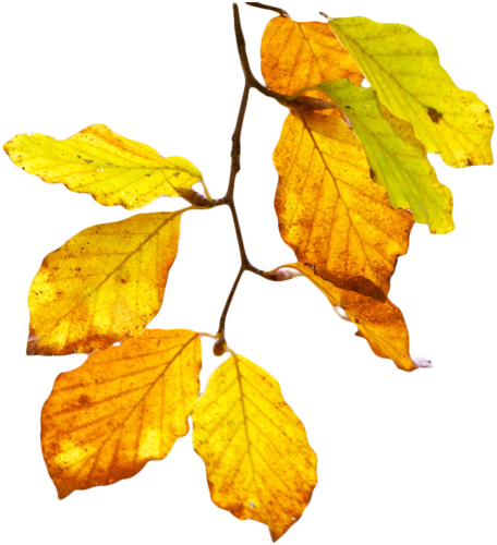 priss_flutteringleaves_yellowleaves.png