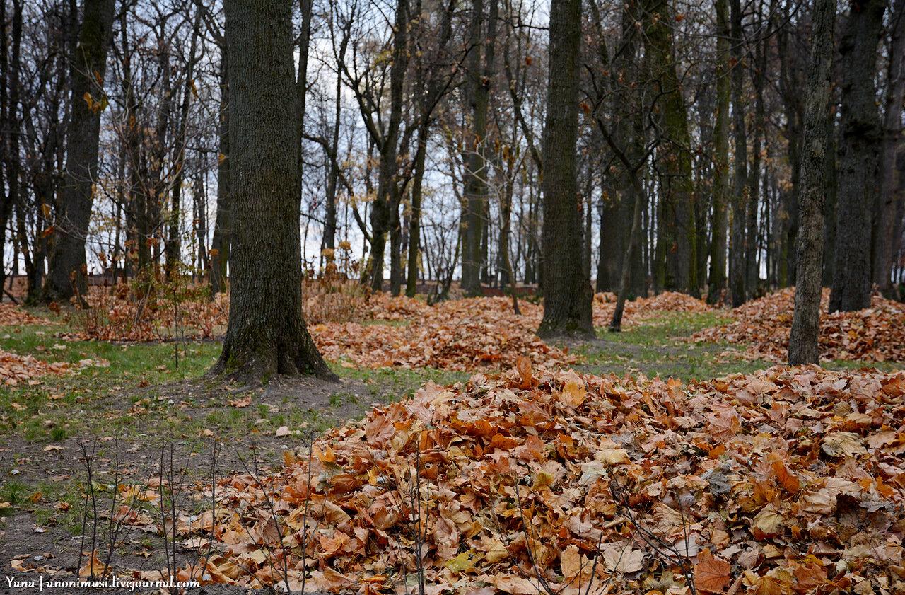 Осенний парк. Гомель