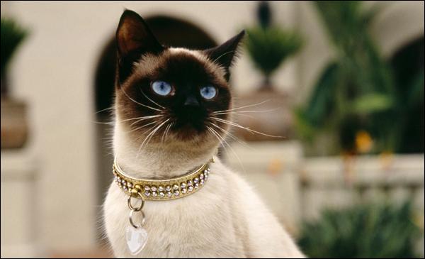 Кастинг котят на главную роль в мюзикле пройдет в Минске