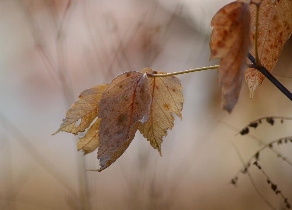 Фото картинки осень грусть