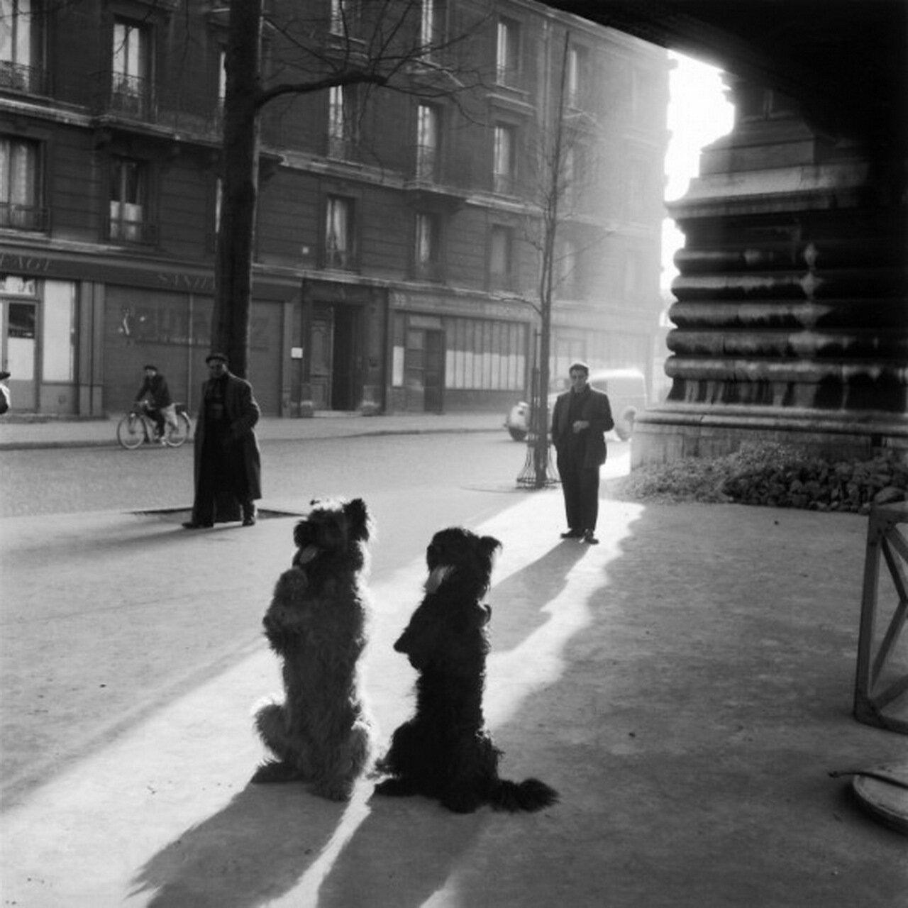 1953. Собачья капелла