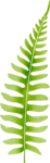 ldw_UnderPalmTree_grass5.png