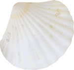 ldw_UnderPalmTree_shell8.png