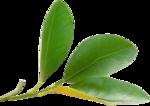 Lemony-freshness_elmt (61).png