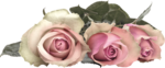 MagicalReality_VinMem1_pink roses2.png