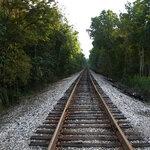 zCaliDesign_Train_Papers  (9).jpg