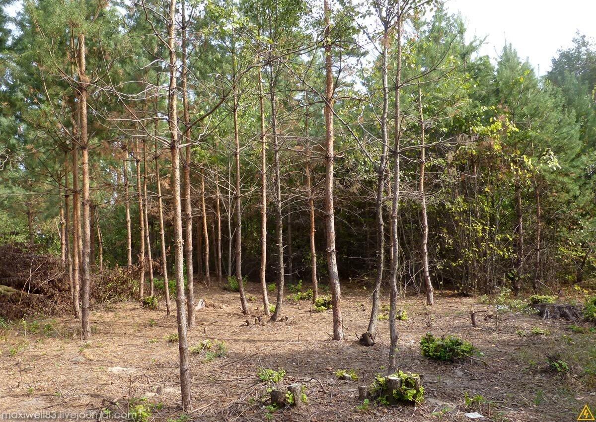 Прогулочка по лесу-2