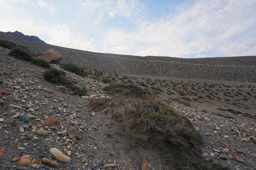 Растительность Гималаев