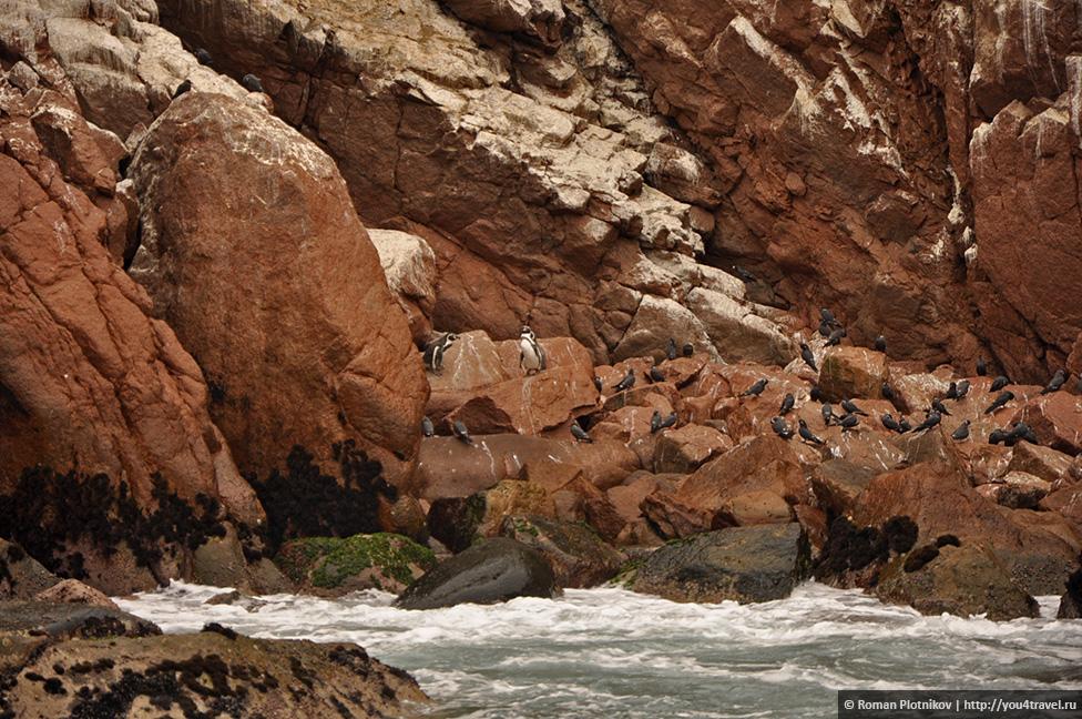 0 16174d 31b31eb2 orig Национальный парк Паракас и острова Бальестас в Перу