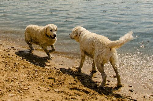 Девушка и собаки !