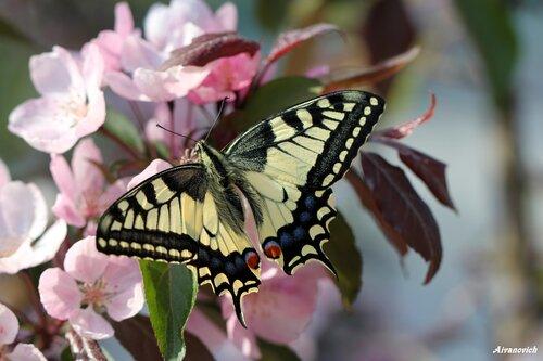 """Итоги конкурса """"Красивые бабочки"""""""