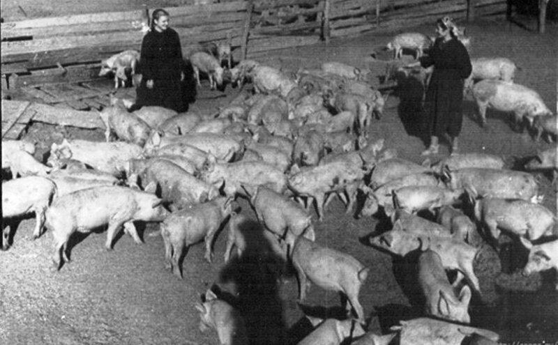 Сельские жители раннего СССР. 024.jpg