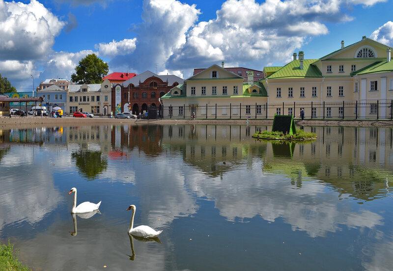 лебеди в городе