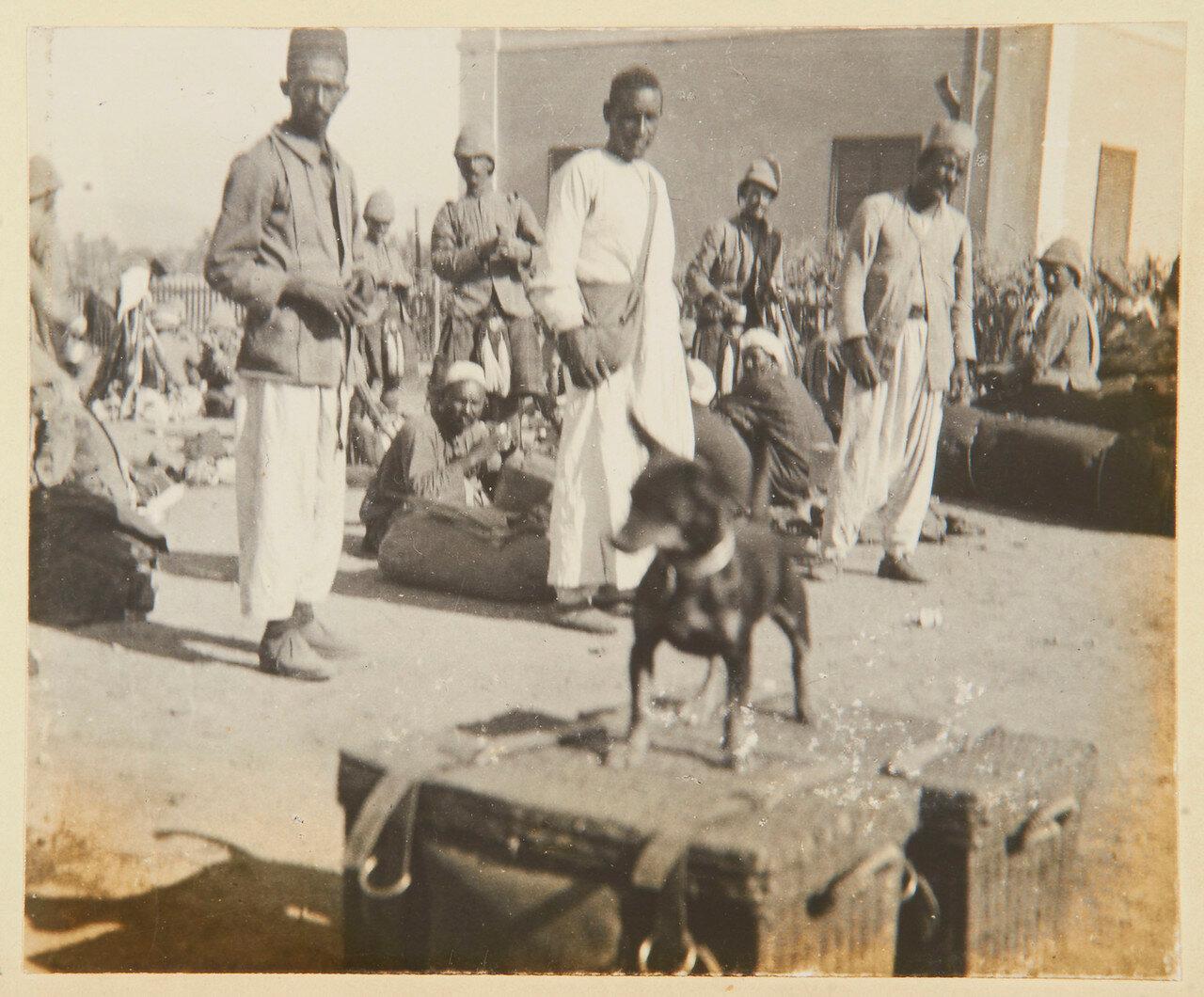 Васса, батальонная собака, принадлежавшая одному из тех солдат, кто пал под Омдурманом. Станция Луксор