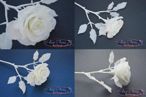 Роза белая.