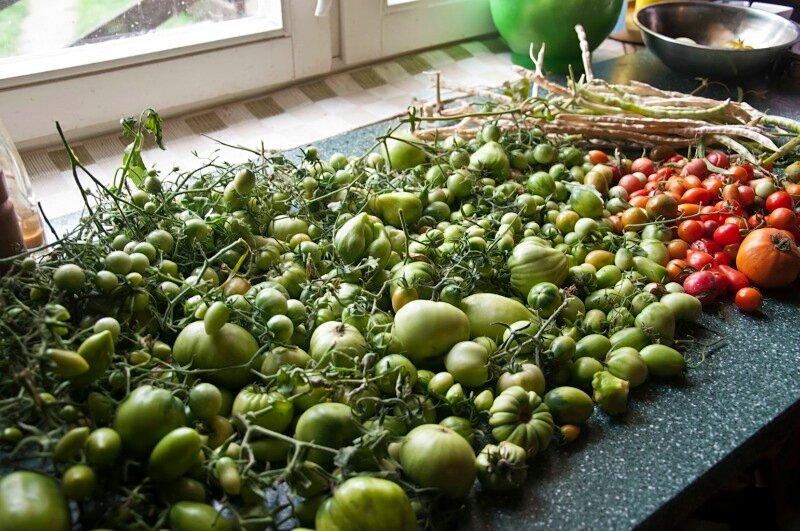 Консервы из зеленых помидоров