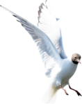 ldw_UnderPalmTree_seagull-flying2.png