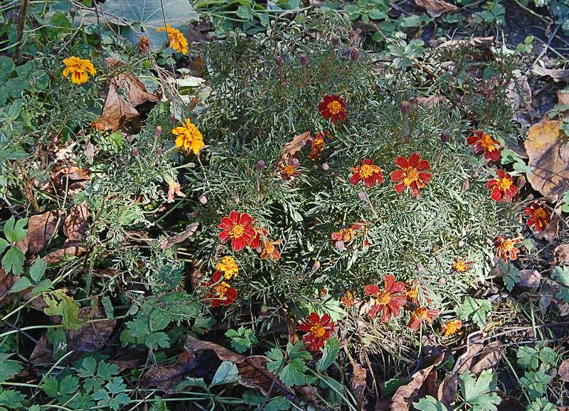 цветы после заморозков