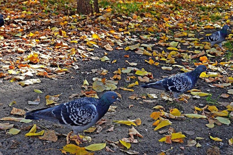 Осенний променад.jpg