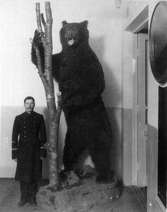 Чучело медведя.