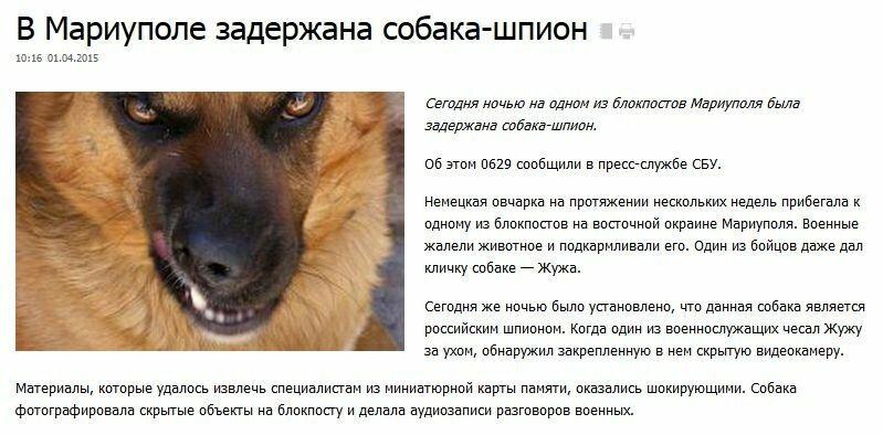FireShot Screen Capture #2404 - 'В Мариуполе задержана собака-шпион - 0629_com_ua' - www_0629_com_ua_news_784785.jpg